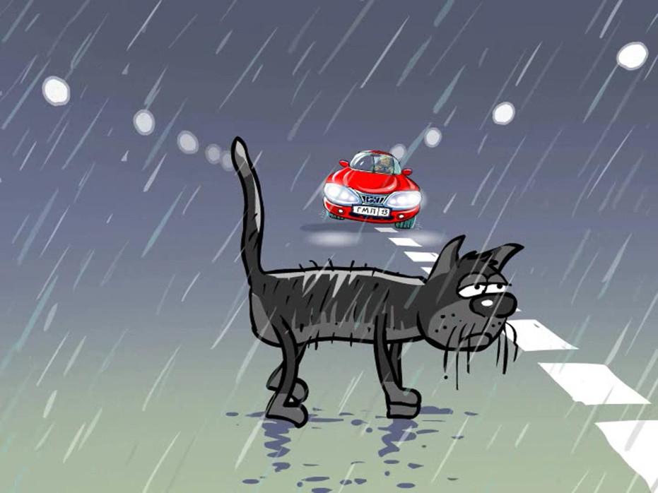 кот на дороге